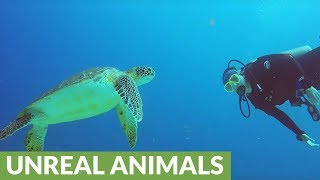 Diver has magical moment with curious sea turtle