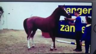 ESCAPE Z ( EMERALD X HEARTBREAKER X CARTHAGO ) APPROVED STU