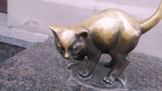 Коты Санкт-Петербурга. Часть 2