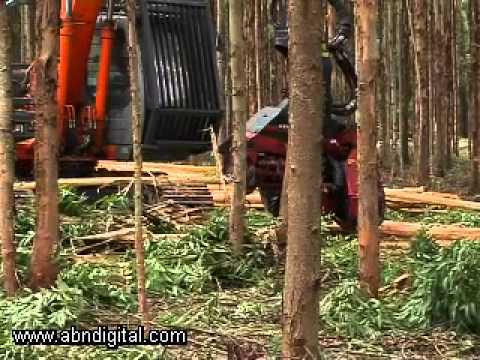 Timber Harvesters in Kwa Zulu Natal