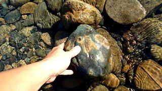 Found sapphire in the river