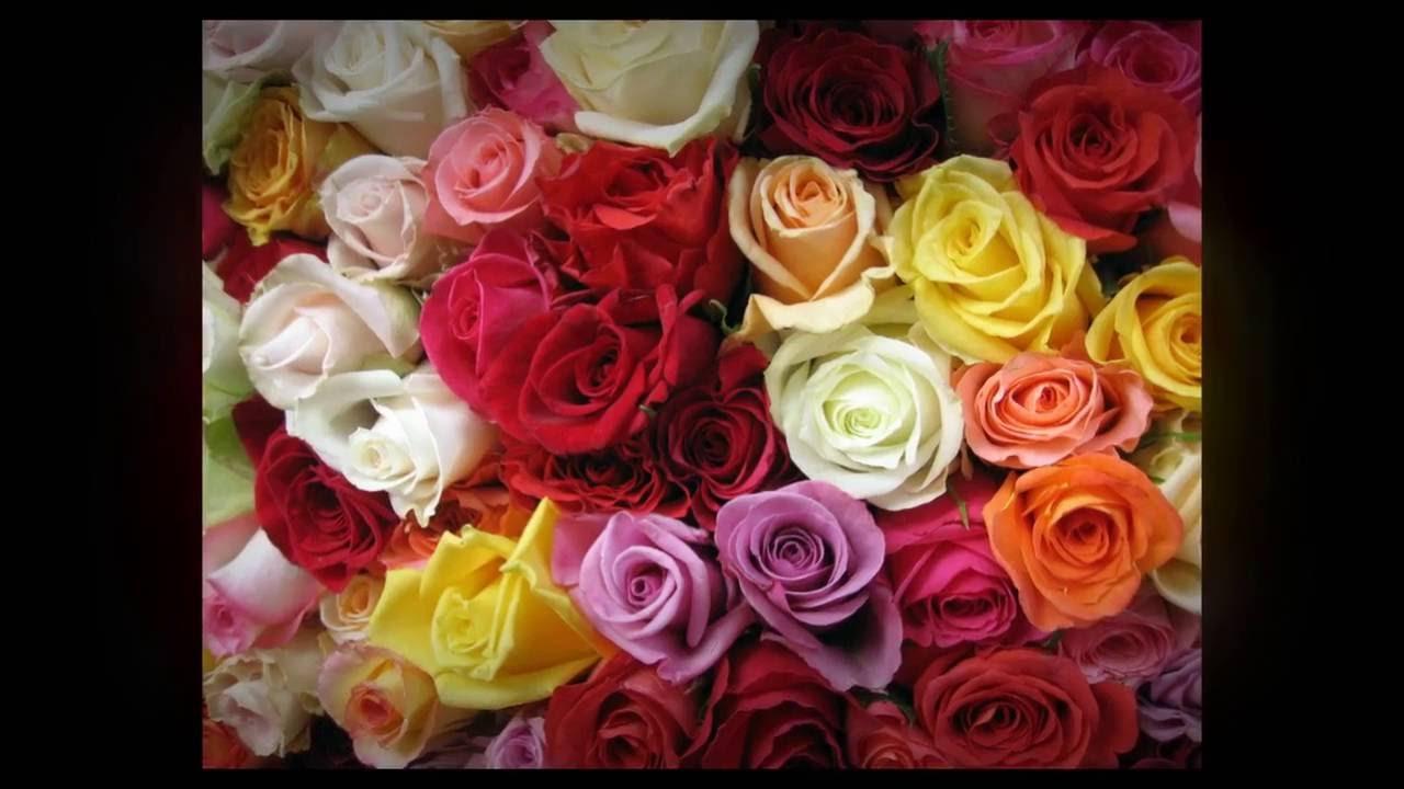 Flower arrangement in melbourne how to choose the right rose for flower arrangement in melbourne how to choose the right rose for every occasion izmirmasajfo