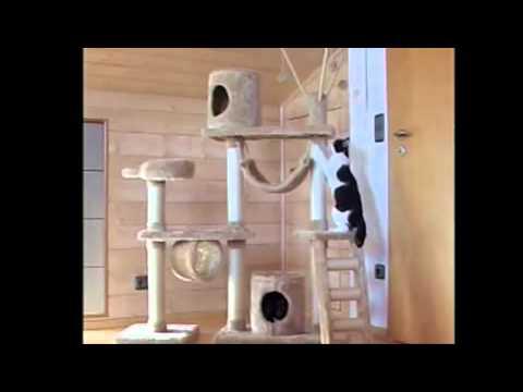 Игровой комплекс и черно белые кошки