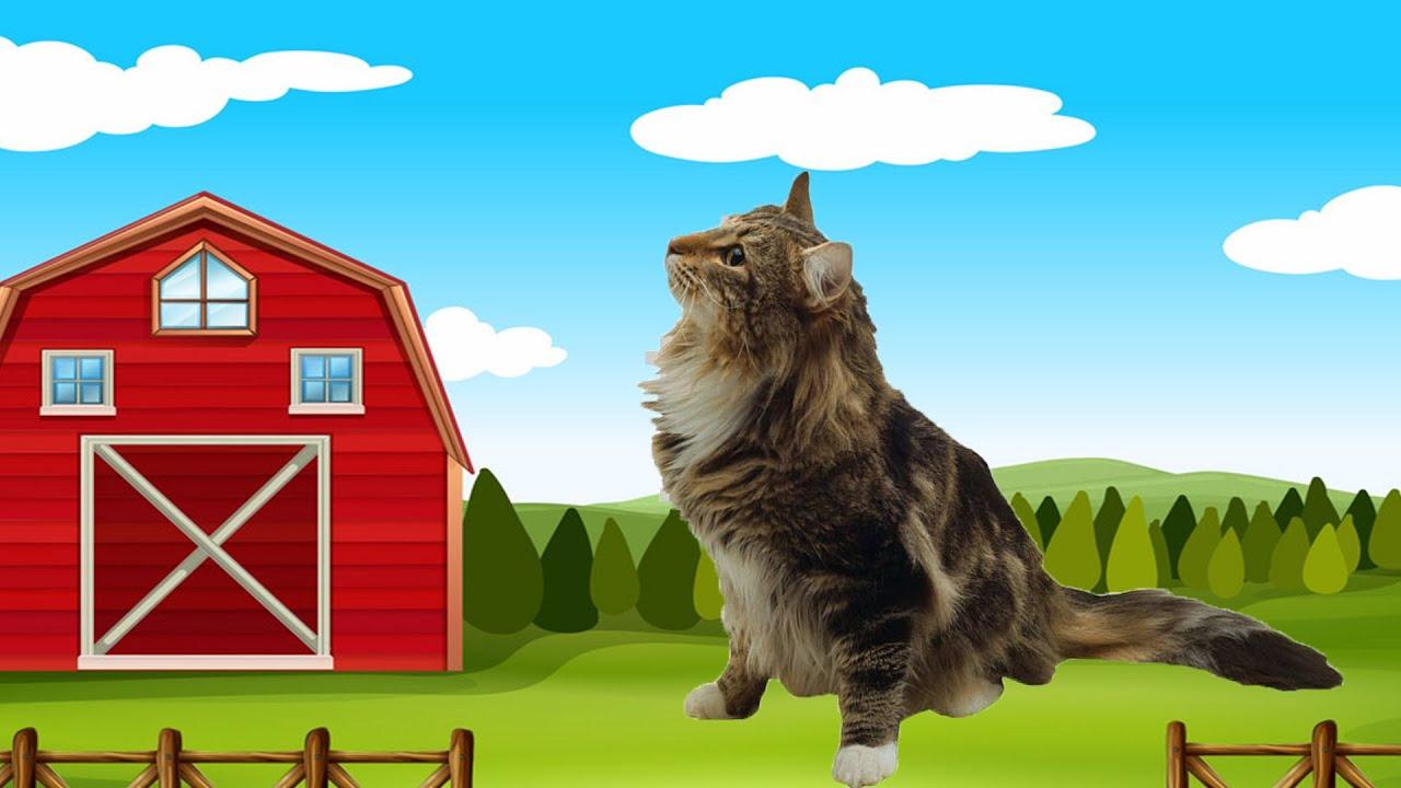 Играем на породе кошки МЕЙН КУН в игре Симулятор кота и кошки