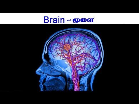 Ariviyal Arivome By Dr.Kumar Ganesan |Brain