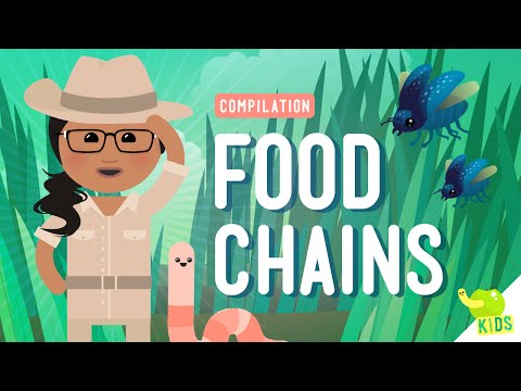 Food Chains Compilation: Crash Course Kids