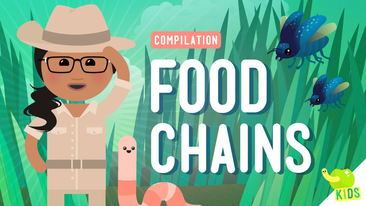 17 Cool Ways to Teach Food Webs and Food Chains [ 720 x 1280 Pixel ]