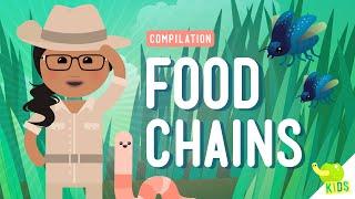Food Chains Compilation: Crash Course Kids
