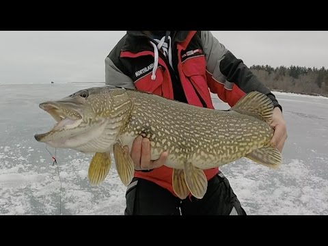 GIANT Mille Lacs Pike! Tip-Up Fishing Late Ice 2017