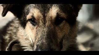 """Общество защиты животных """"Четыре лапы"""" (18+)"""
