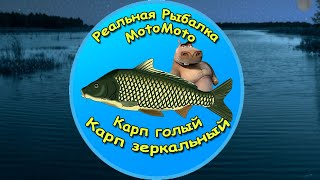 Как поймать Карпа Голого и Карпа Зеркального на Рыбхозе NEW Реальная Рыбалка