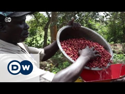 Coffee from South Sudan - blessing or curse?   Global 3000