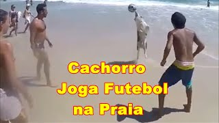Cachorro joga futebol na praia Dog plays soccer on the beach in Brazil