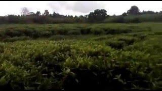 Land for Sale in Tigoni Limuru