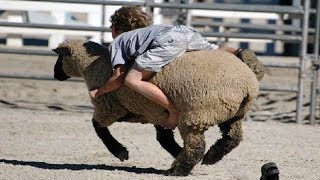 Crianças engraçadas e crianças brincando com animais de fazenda