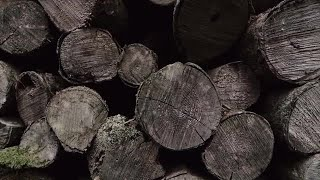 Pile Of Old Wood Logs  Stock Video