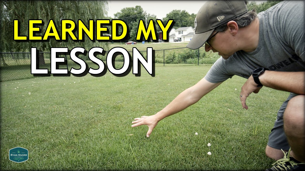 How To Remove Tall Fescue Clumps In Your Lawn Youtube