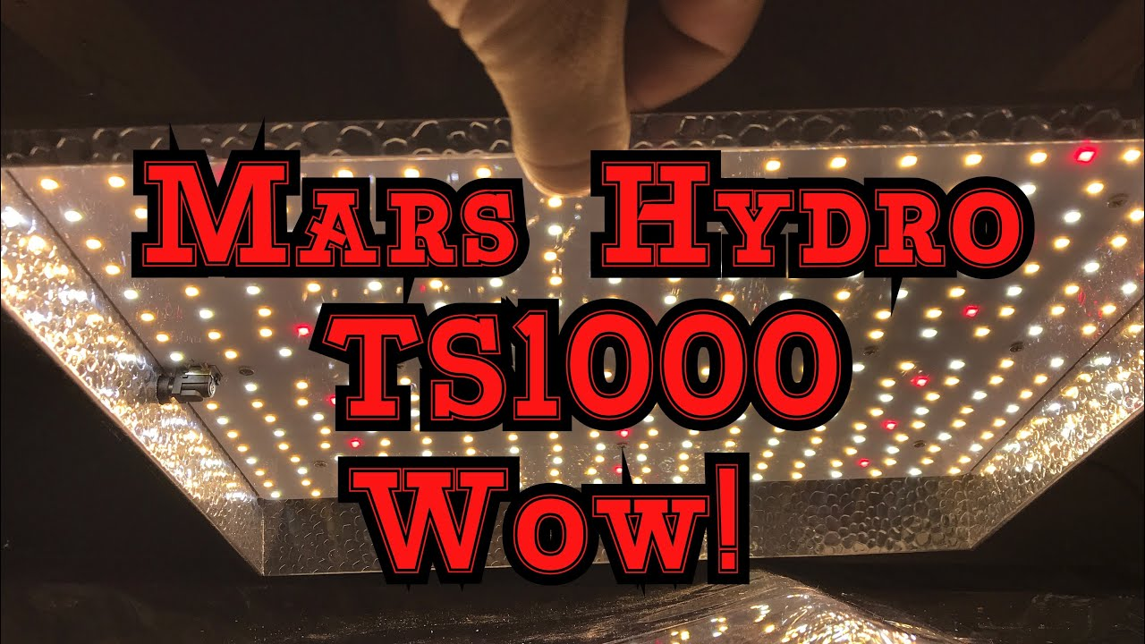 Mars Hydro TS1000 LED Grow Light Review: WOW The Plants Look Good!