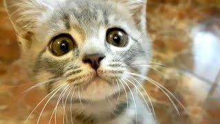 КОТЕНОК АТАКУЕТ КАМЕРУ. Funny cats video