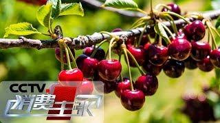 《消费主张》 20190605 这些珍稀水果,你吃过吗?  CCTV财经