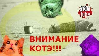 смешные видео подборка смешные коты смешное видео про котов киски котэ приколы с котами