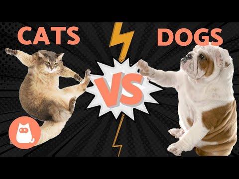Pet Corner - DOGS vs CATS - Who Wins Using Scientific Research?
