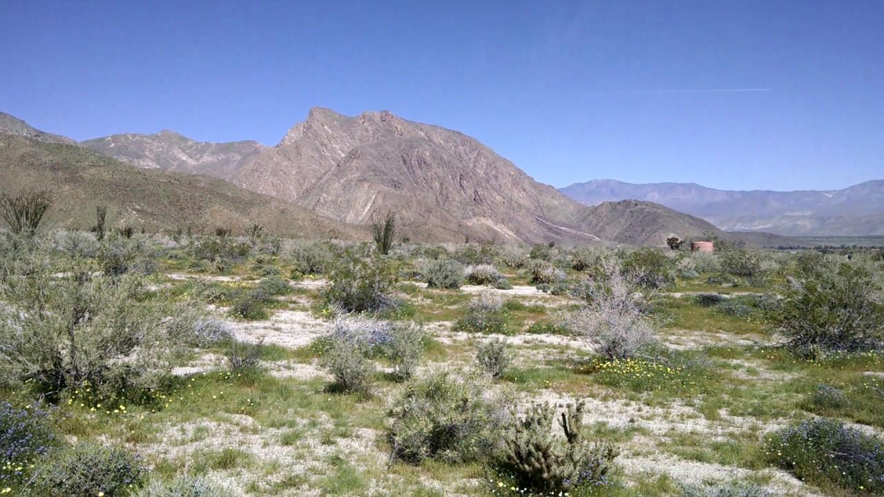 anza borrego desert wild flowers youtube