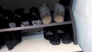 Кириллов Дмитрий купил тумбу для обуви