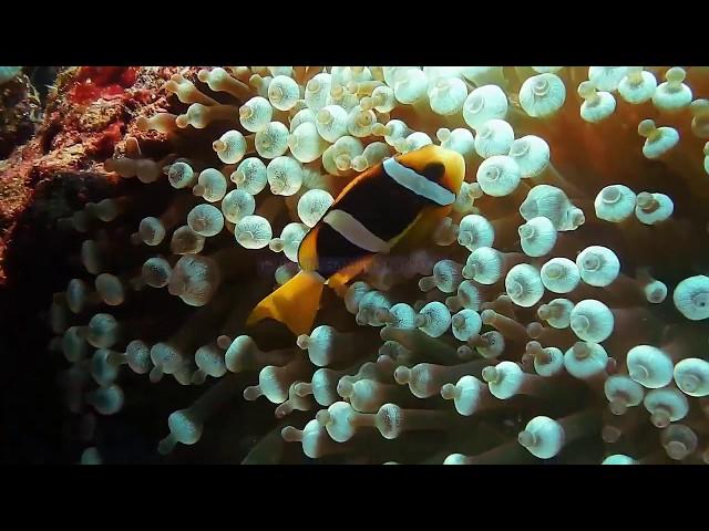 Чарующий подводный мир