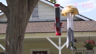 Squirrel Proof Bird Feeder Hanging On Tree W/ Small Birds Eating From It | Hd Stock Video Footage