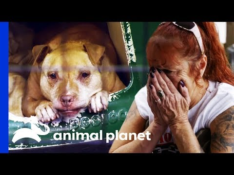 After 13 Years At Villalobos, Summer Finds Her Forever Home | Pit Bulls & Parolees