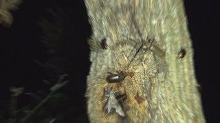 夜の森にカブトムシとクワガタムシを探しに出かけました。 nsects at ni...
