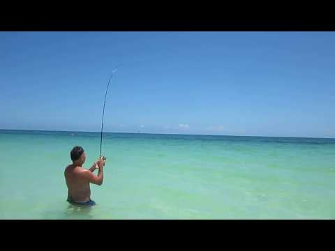 Barracuda FIshing Cayo Coco From The Beach !!