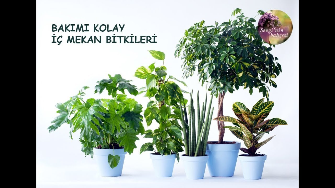 Ev Çiçekleri İçin Pratik Bilgiler