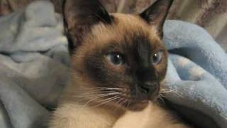 Extreme Cute Warning! - Kittens' first video