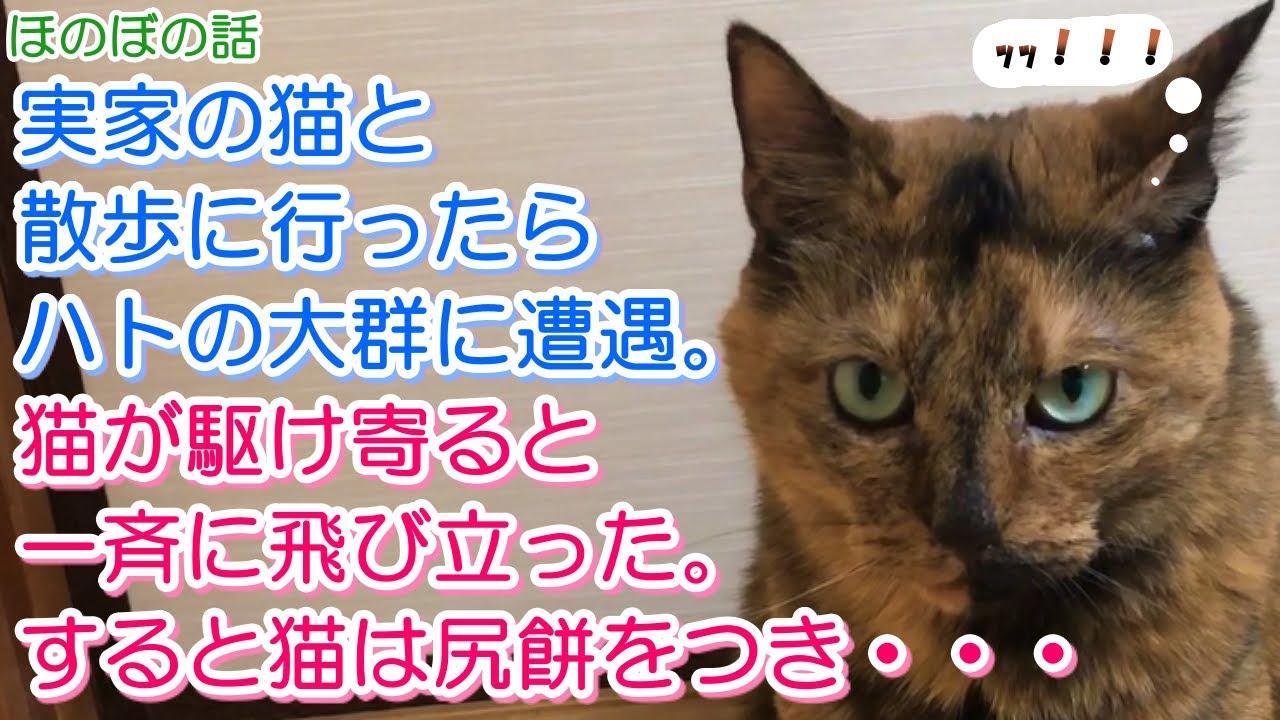 【猫のほのぼの話】実家の猫と散歩に行ったらハトの大群に遭遇。猫が駆け寄ると一斉に飛び立った。すると猫は尻餅をつき・・・