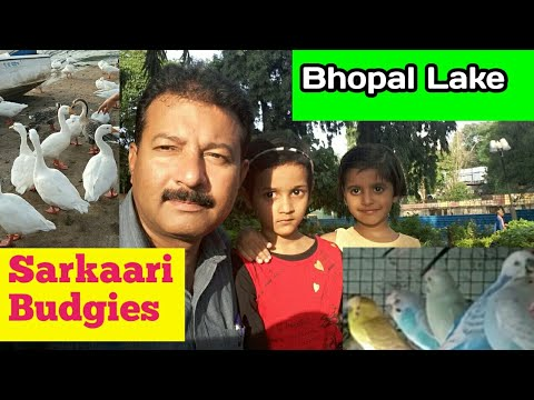 Govt: budgies parrots and Lake View Bhopal