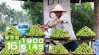 Trồng ổi Đông Dư: Hái quả quanh năm, 4 mùa đắt hàng | VTC16
