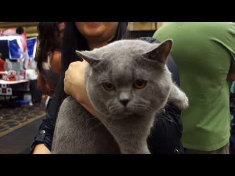 Cat Show Vlog - Las Vegas