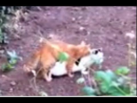 xxx cat