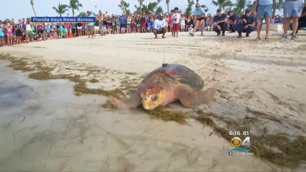 And They're Off! 'Coco' & 'Little Money' Released In Tour de Turtles