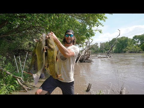 River Fishing Using Set Lines For Flathead Catfish!! (FULL STRINGER)