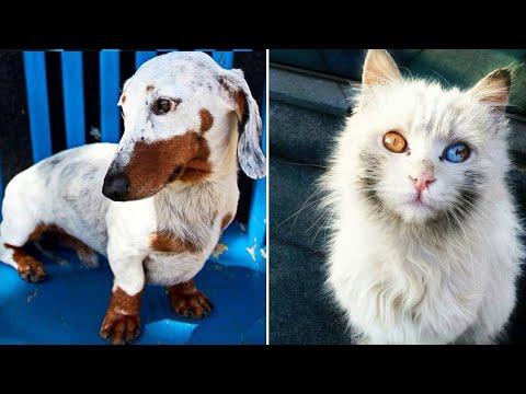 50 Кошек и Собак с Необычной Внешностью!