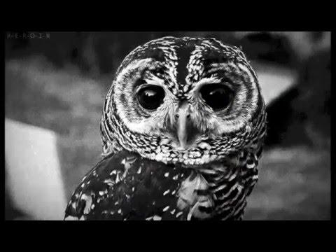 милые совы картинки