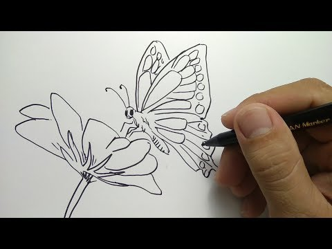 Cara Menggambar Kupu Kupu How To Draw Butterfly Youtube