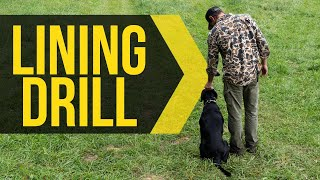 Teach lining drills with your dog