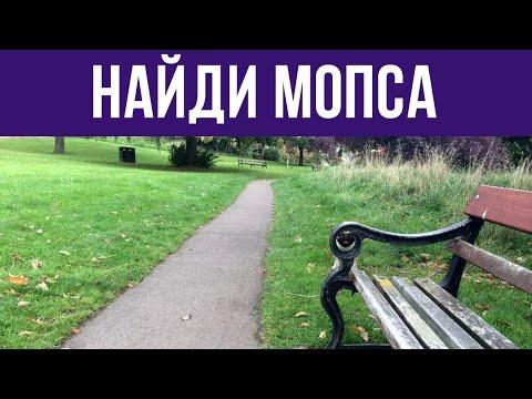СУПЕР ТЕСТ на ВНИМАТЕЛЬНОСТЬ - НАЙДИ ЖИВОТНЫХ на фото! 🐈 БУДЬ В КУРСЕ TV
