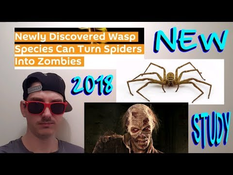SPIDER ZOMBIES ARE REAL - STUDY ON NEW WASP SPECIES