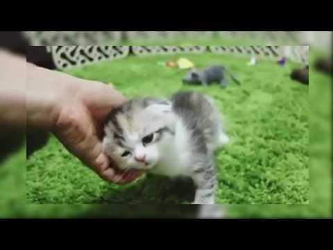 Adorable Sleeping Kitten Collection 2017