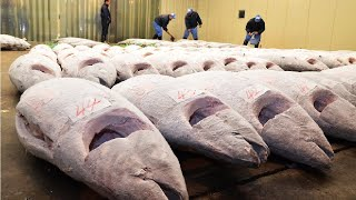 Frozen Tuna After Harvest Vessel to Factory - Tuna Processing and Packing